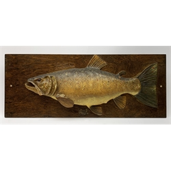 A George V plaster half block fishing trophy of a Trout, L83.5cm.