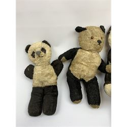 Seven English panda bears c1930s-50s including two Pedigree with plastic dog type noses H11.5