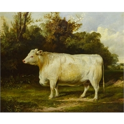 English School (19th century): Portrait of a Whitebred Shorthorn Heifer in Landscape setting, oil on canvas indistinctly signed, 61cm x 75cm Notes:  the stretcher is inscribed 'J Thomas Ford Esq., Burton Pidsea' (East Yorkshire), there is a listing in Burton Pidsea's history '.....one of the larger houses certainly built on a new site was Bramhill House. Thomas Ford, farmer, mortgaged its site, Bramer Hill close, and other lands in 1844 for £3,000, and the house was evidently built soon afterwards