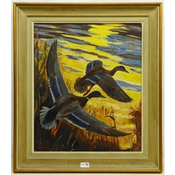 Sir Peter Markham Scott (British 1909-1989): Mallards Rising from Reeds at Sunrise, oil on canvas signed and dated 1961, 59cm x 49cm Provenance: with Arthur Ackermann and Son Ltd, Old Bond St. London, label verso