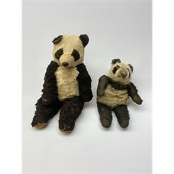 Four English panda bears including 1930s night-dress case, probably Merrythought, with wool plush body and velvet paw pads H17